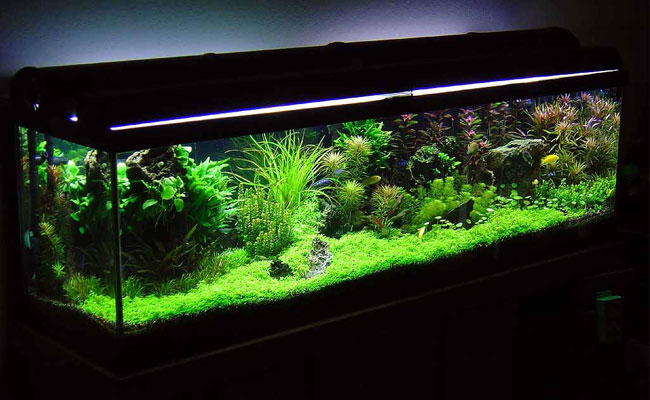 Featured Article - Betta Tank Mates
